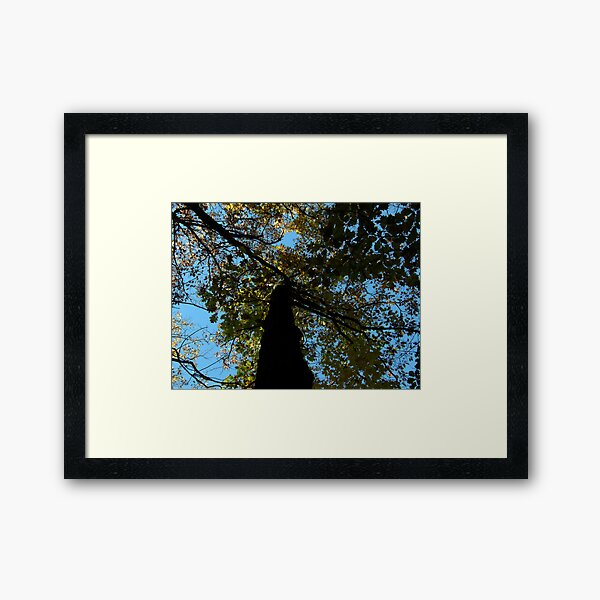 Looking Through Autumn Leaves Framed Art Print