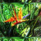 15's Paradise by Kinka T Celltography