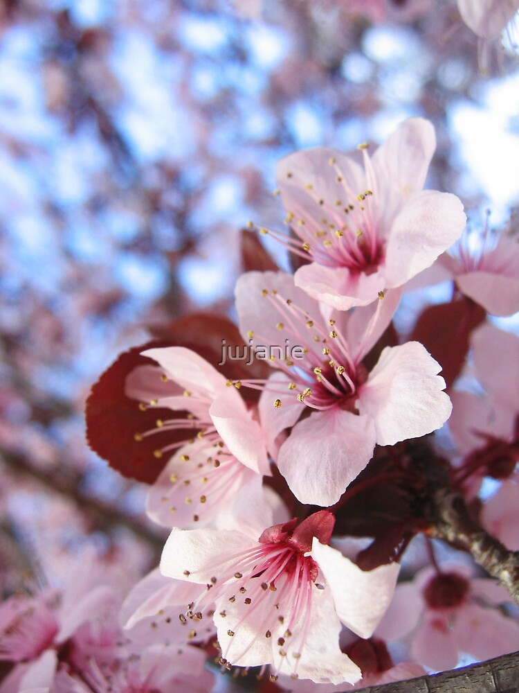 Blossom close up by jwjanie