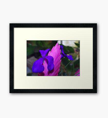 Blooms of Blue Framed Print