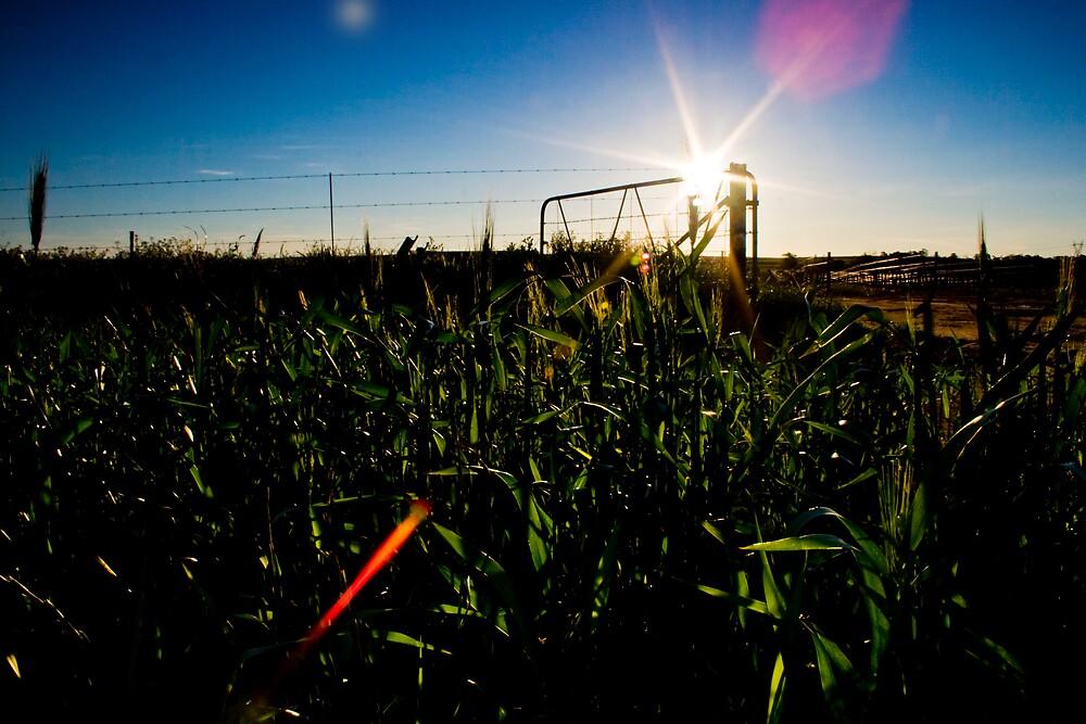 field of light by MrTim