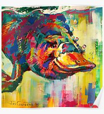 Duck-Billed Platypus - Australian mammal Poster