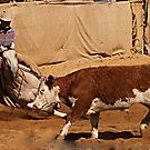 Cow Boy Up by meerimages