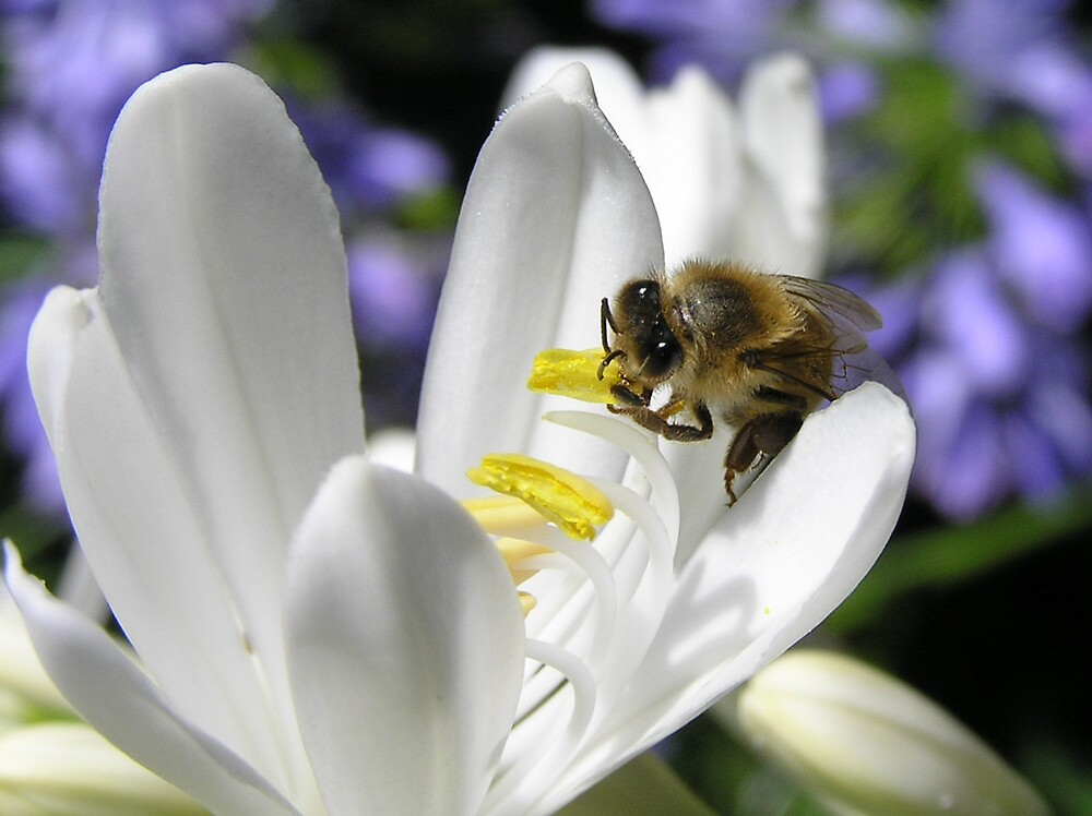 Bee loved by Anna D'Accione