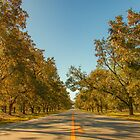 Pecan Tree Lined Roadway by Newfiemom
