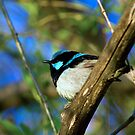 Finch by Greg Halliday
