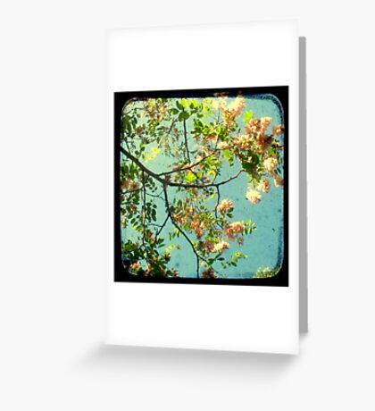 Primavera - TTV Greeting Card