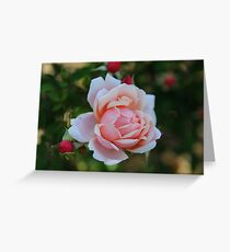 Grandmother's Rose Greeting Card