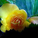 Yellow Beauty by Lolabud