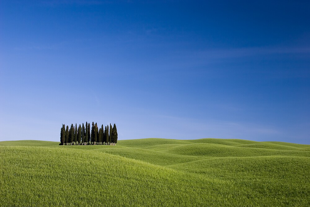 Tuscan Cypress by Ryan Young
