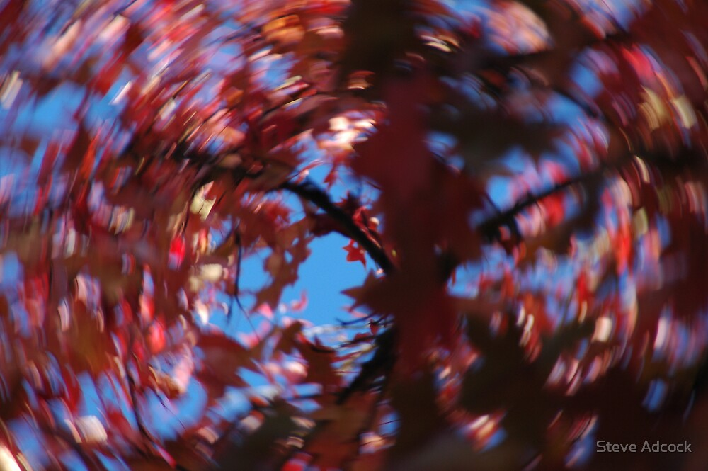 Is autumn getting you spinning? by Steve Adcock