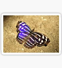 Purple and Brown Butterfly  Sticker
