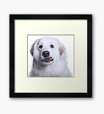 Great Pyr Rescue Framed Print