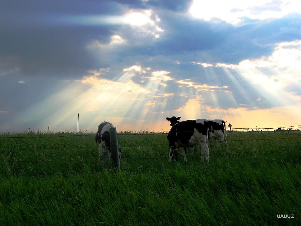 Holy Cows by wwyz
