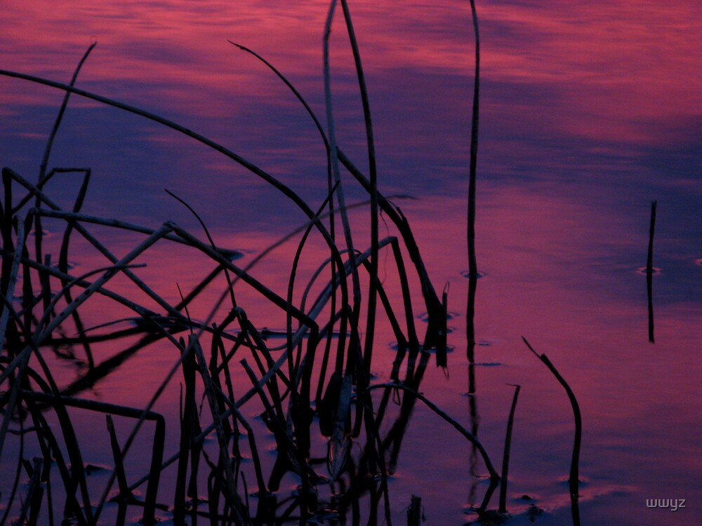 Reeds at Sunrise by wwyz