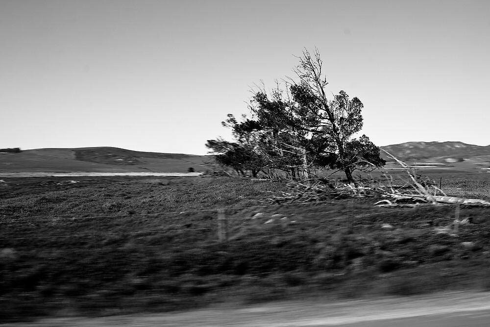 scythian tree by MrTim