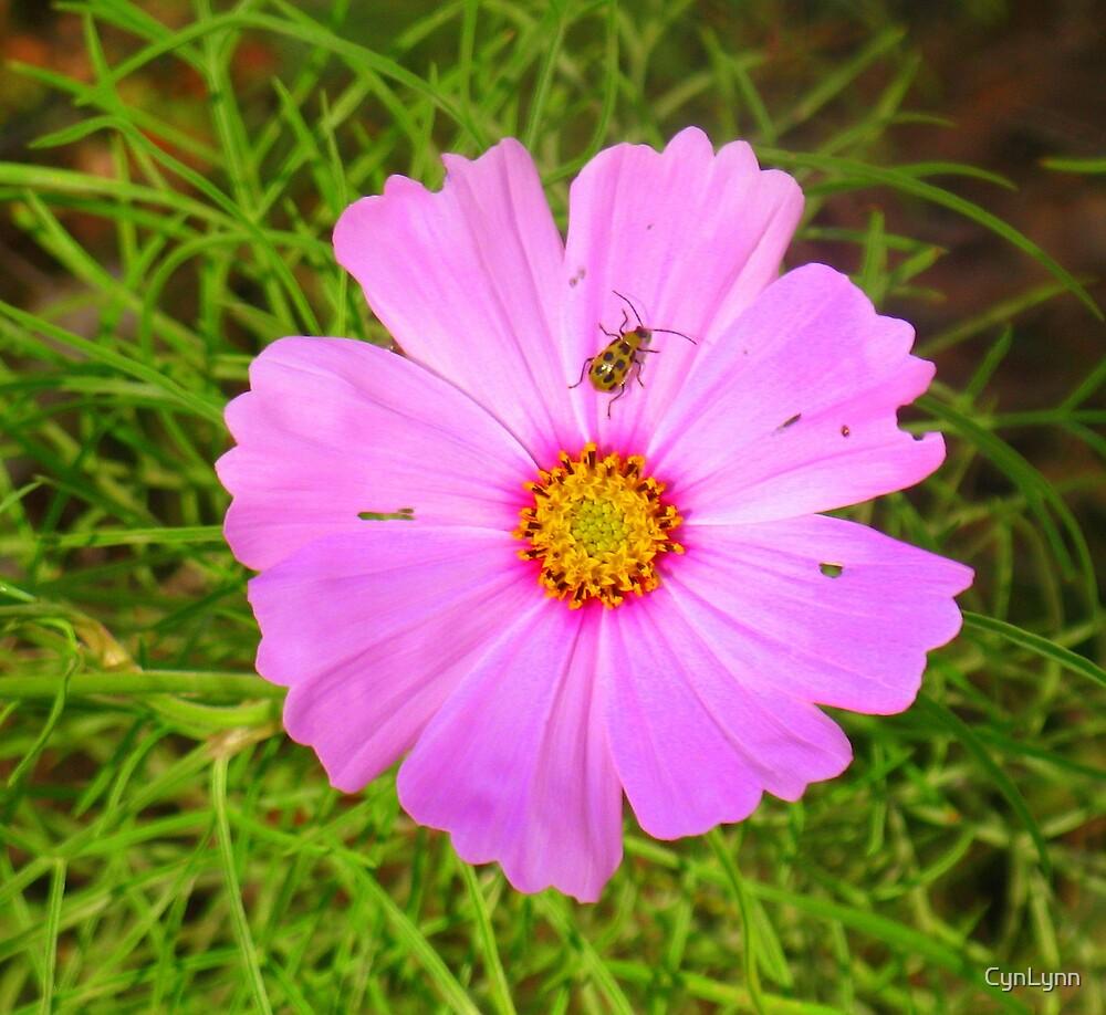 The Last Flower by CynLynn