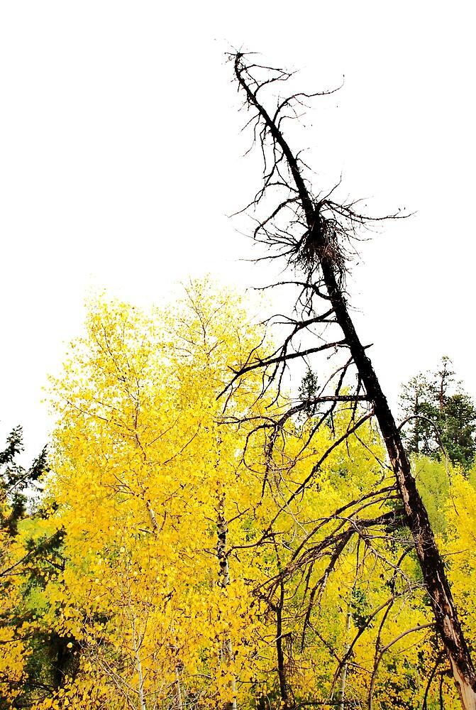 bright yellow by Jenson Yazzie