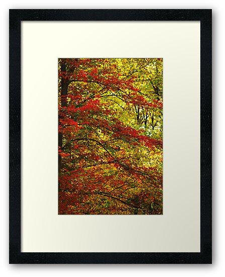 Fall by elisab