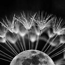 Alien Moon Pods by kevsphotos2008