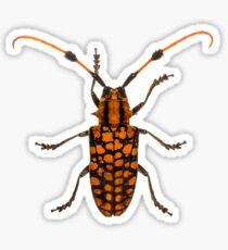Tuft bearing longhorn beetle (Aristobia approximator) Sticker