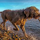 Dog on a Mission by SWEEPER
