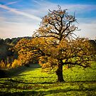 Autumnal Tree. by Dave Hare