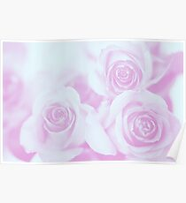Light Blue and Pinkish Purple Roses Poster