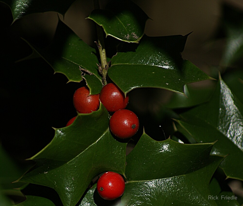 Holly Berries by Rick  Friedle