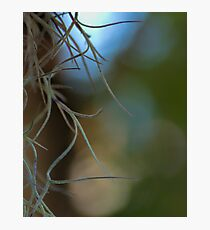 Hanging Moss Abstract Photographic Print