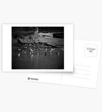 Seagul Postcards
