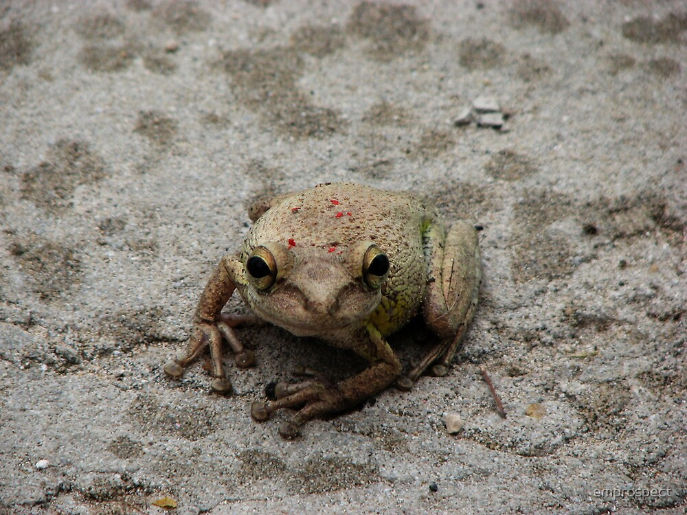 frog by emprospect