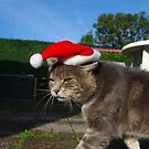 Cat in a Santa hat by turniptowers