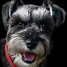 Bob The Dog by Brian Tarr