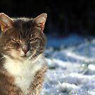 Tabby cat in garden in winter by turniptowers
