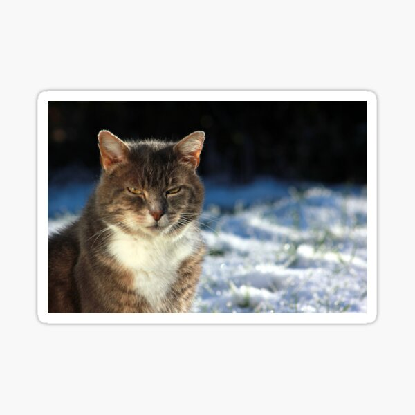 Tabby cat in garden in winter Sticker