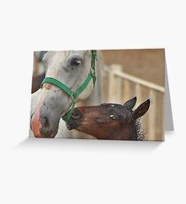 Horse with H Greeting Card