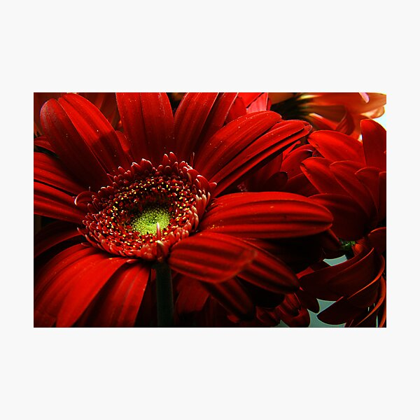 Red Floral Photographic Print