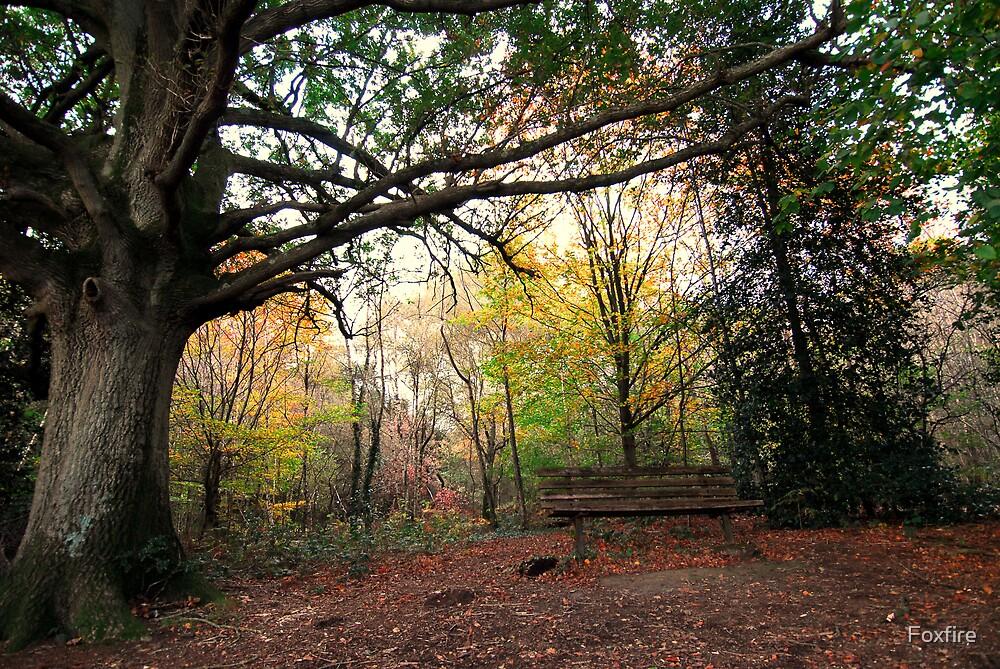 Forest Walk by ©FoxfireGallery / FloorOne Photography