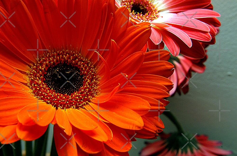 Orange and Pink Floral by Clayton Bruster