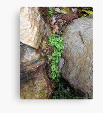 Rocky green Canvas Print