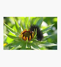The very hungry caterpillar Photographic Print