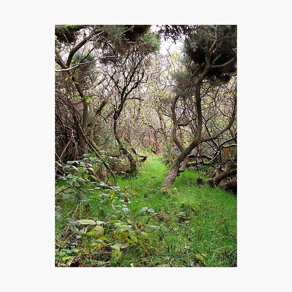 Path to adventure Photographic Print