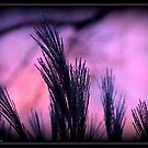 Pampas Grass at Sunrise by Deb  Badt-Covell