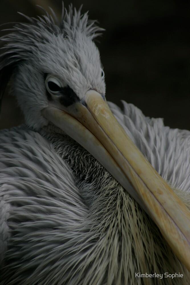 Bird by Kimberley Sophie