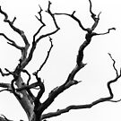 B&W Branches by Christopher Wardle-Cousins