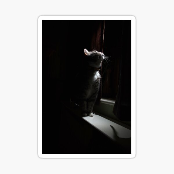 Tabby cat looking out of window at night Sticker