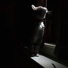 Tabby cat looking out of window at night by turniptowers