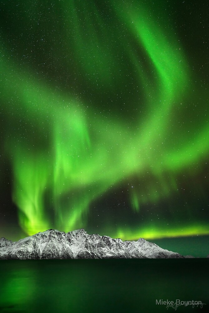 Arctic Magic by Mieke Boynton