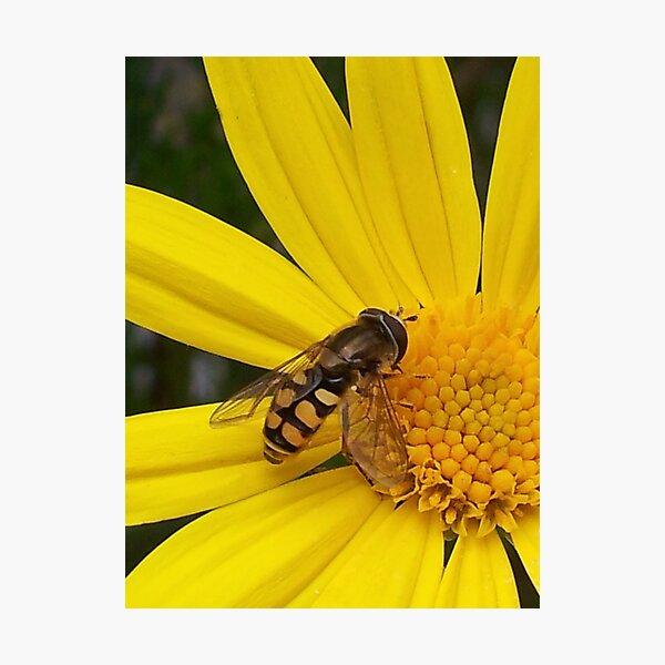 Now I know why the bees are eating here Photographic Print
